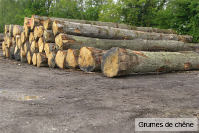 scierie Nord Pas-de-Calais : grumes de chêne